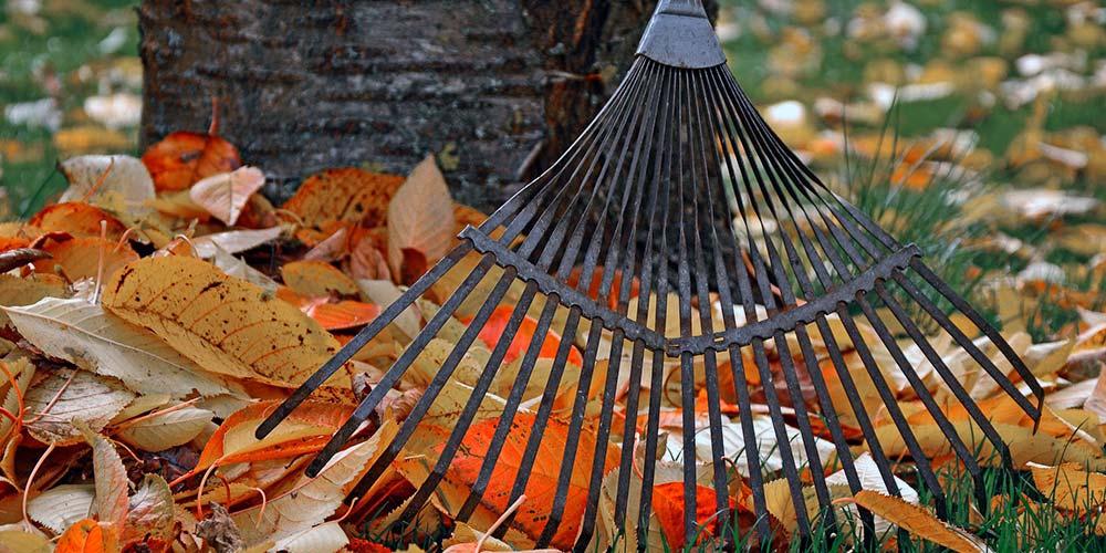 Efterårs nedfaldne blade - Efterårsklargøring af haven